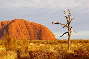 Vogels, dode boom en Uluru  landschap, Australië