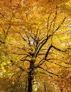 Gouden boom van Wouter Bos