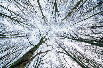 Aan de toppen van de bomen van Marcel Derweduwen