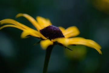 gelbe Herbstblume von Tania Perneel