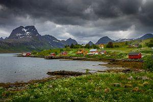 Natuur op de Lofoten.