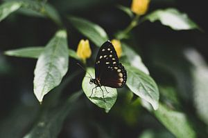 Extreme close-up van vlinder van