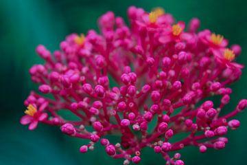 Tropische bloem von Stedom Fotografie
