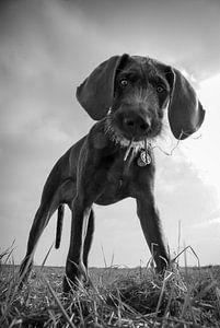 De nieuwsgierige hond van