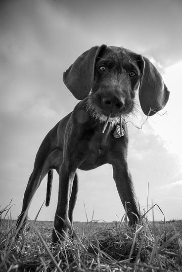 De nieuwsgierige hond
