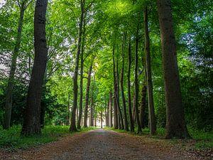 Zonsopgang in een oud bos. van Ruurd Dankloff