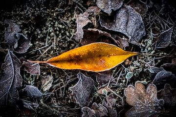Het gouden blad