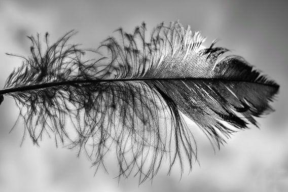 Veer in zwart wit