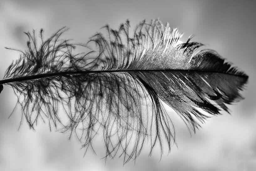 Veer in zwart wit van Angela Wouters