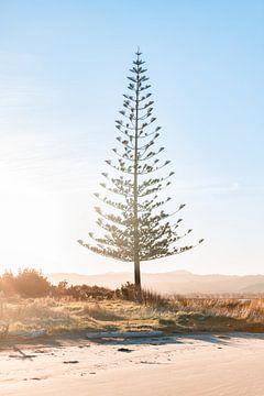 Baum bei Sonnenuntergang von Niels Rurenga