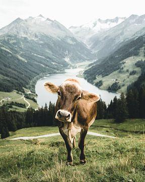 Tiroolse koe in een prachtig zomerlandschap in het Zillertal van Daniel Kogler