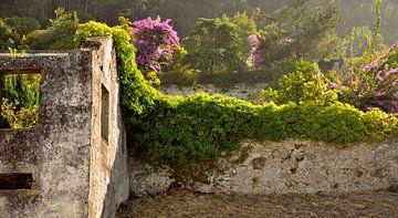Green House van Sabrina Varao Carreiro