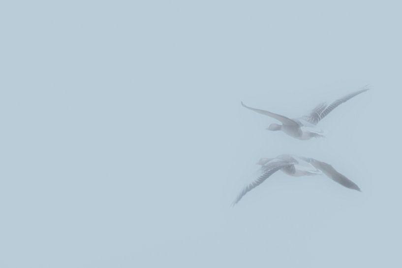 Ganzen door de mist van Henk van Essen