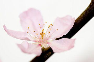 Bloemmetje in volle bloei van Henk Fung