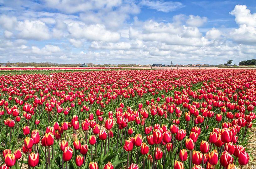 Rode Tulpen op Texel / Red Tulips on Texel van Justin Sinner Pictures ( Fotograaf op Texel)
