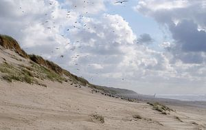 duinen aan zee van