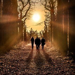 Wandelaars in het bos met de zon in het tegenlicht