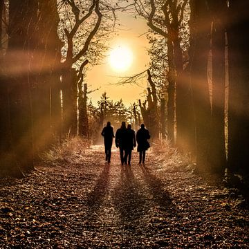 Wanderer im Wald mit der Sonne im Gegenlicht von Harrie Muis
