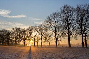 Winters landschap in tegenlicht