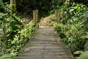 Houten brug in de jungle van Ecuador van Jos van Ooij
