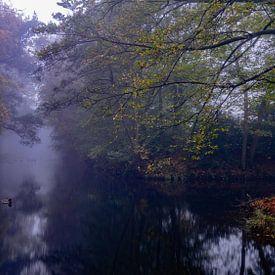 Foggy morning at Bergerbos van Arno van der Poel