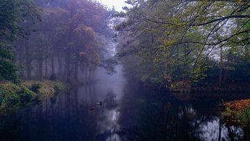 Foggy morning at Bergerbos