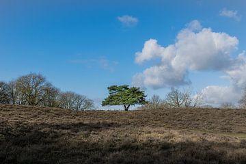 Eenzame boom op de heide van Patrick Verhoef