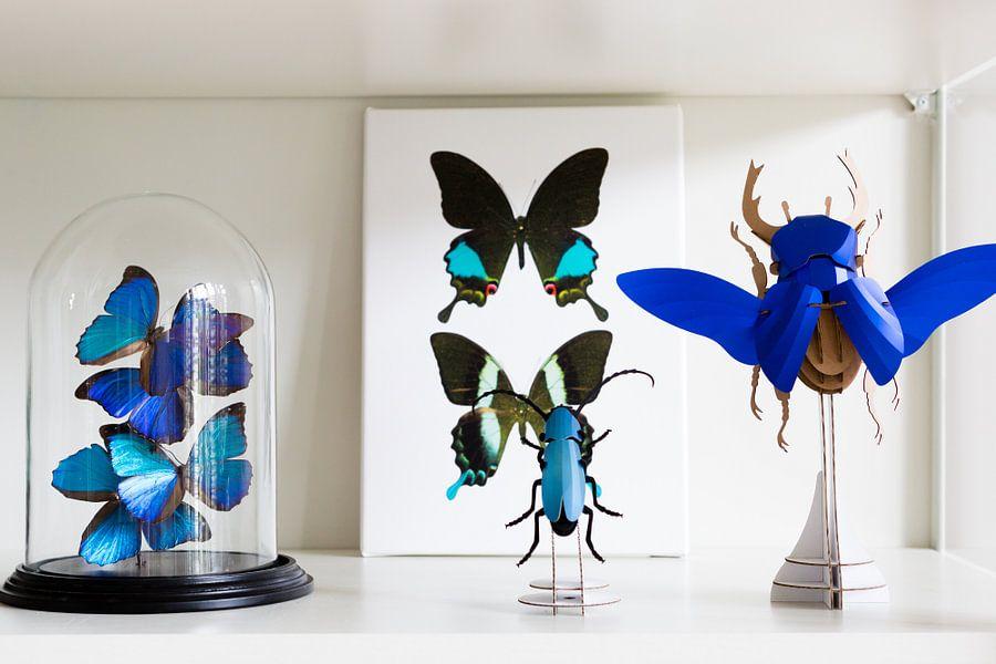Klantfoto: Rariteitenkabinet_Vlinder_02 (gezien bij vtwonen) van Marielle Leenders, op canvas