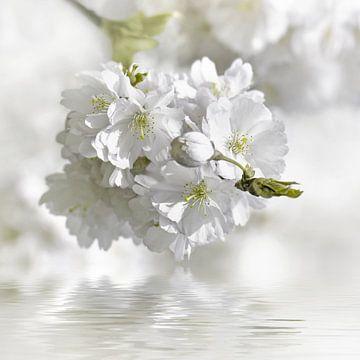 voorjaar van Violetta Honkisz