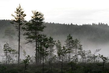 Mist in het dennenbos von @ GeoZoomer