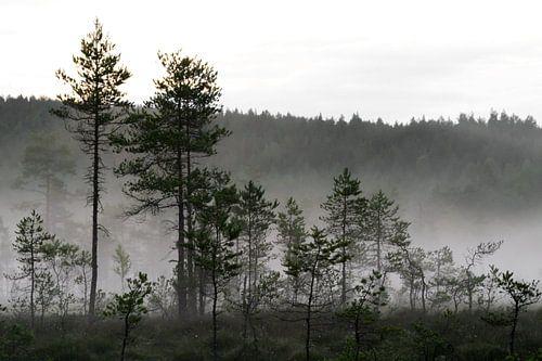 Mist in het dennenbos