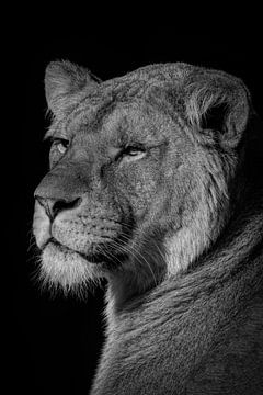 Löwe: Porträt einer schönen Löwin in Schwarz und Weiß von Marjolein van Middelkoop