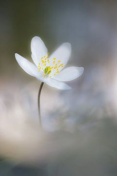 Frühling von Pim Leijen