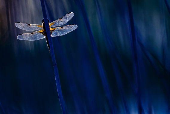 libelle van Pim Leijen