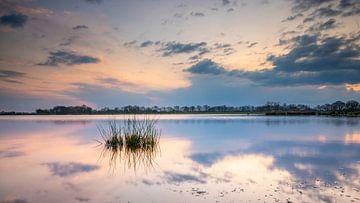 Graspollen in het water in het mooie Westerkwartier van