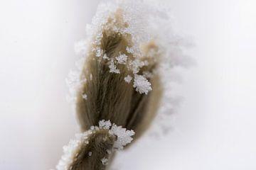 bevroren bloem knopje van mandy vd Weerd