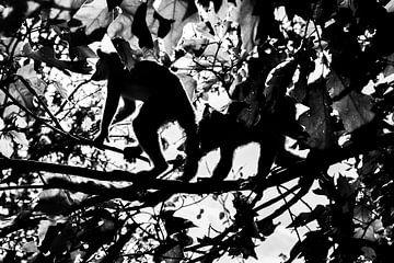 Affentricks Silhouette von Dian Kors