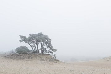 Karakteristieke boom op het Hulshorsterzand
