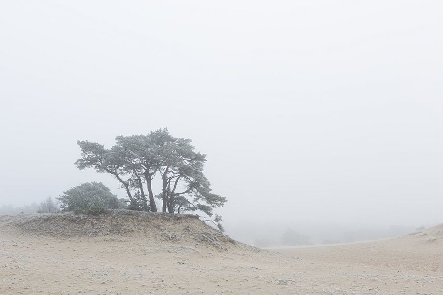 Karakteristieke boom op het Hulshorsterzand van Theo Klos
