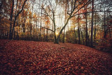 Goldenes Herbstlaub