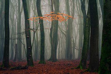 Die letzten Herbstblätter 2 von Rick Kloekke