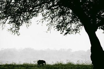 kleiner Elefant von Francis Dost