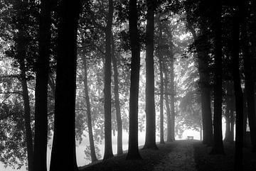 Nebliger Morgen im geheimnisvollen Park von Fotografiecor .nl