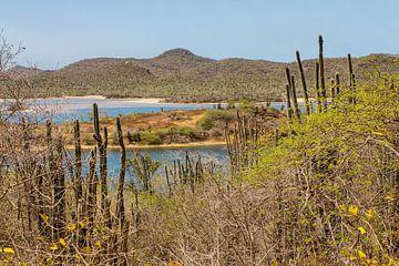 Landschap Nationaal Park Slagbaai met bergen op eiland Bonaire van Ben Schonewille