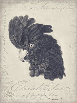 Vintage kaketoe van Andrea Haase