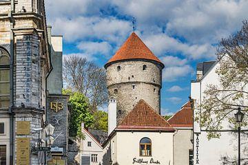 Tallinn Estland  von