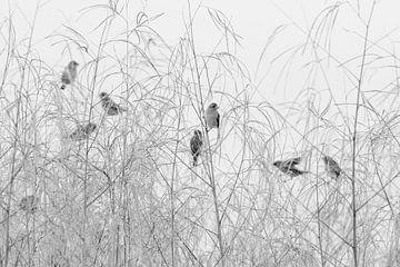Weber Vögel von Angelika Stern