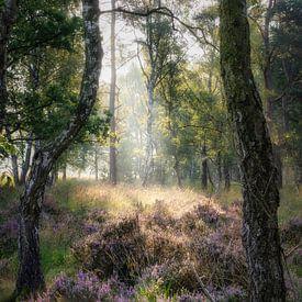 De Buigende Berk van Joris Pannemans - Loris Photography