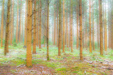 Winters dennenbos tijdens een koude winterdag van Sjoerd van der Wal