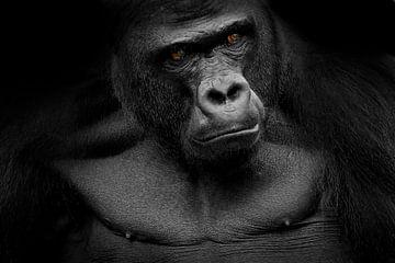 Gorilla van Heiko Lehmann